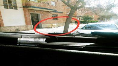 صورة إسبانيا .. رجل يتنكّر في شكل كلب لكسر الحجر الصحي !!