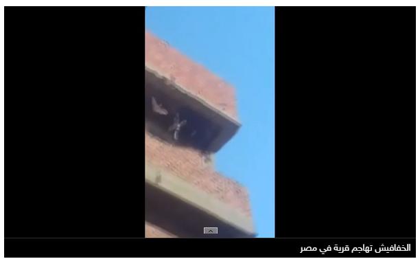 قرية مصرية تتعرض لهجوم من الخفافيش.. وذعر بين الأهالي 1