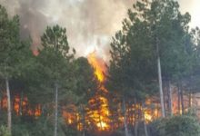 Photo of الحرائق تلتهم المزيد من الغابات لتصل إلى ولاية غازي عنتاب التركية