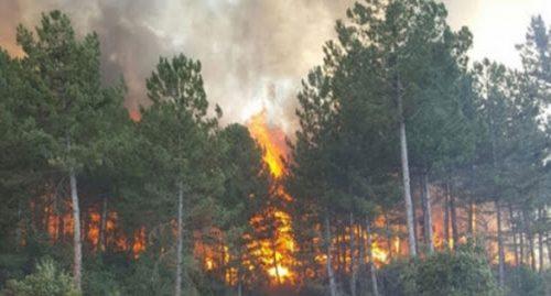 الحرائق تلتهم المزيد من الغابات لتصل إلى ولاية غازي عنتاب التركية