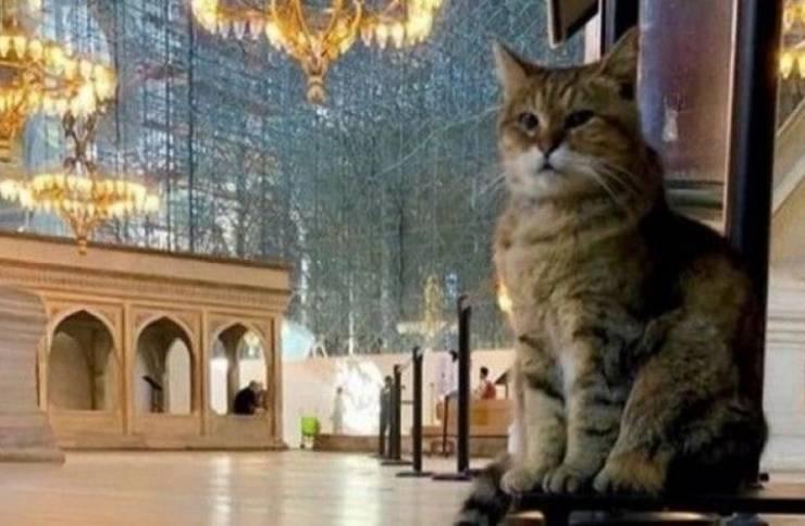 خبر حزين عن قطة 'آيا صوفيا' الشهيرة 1