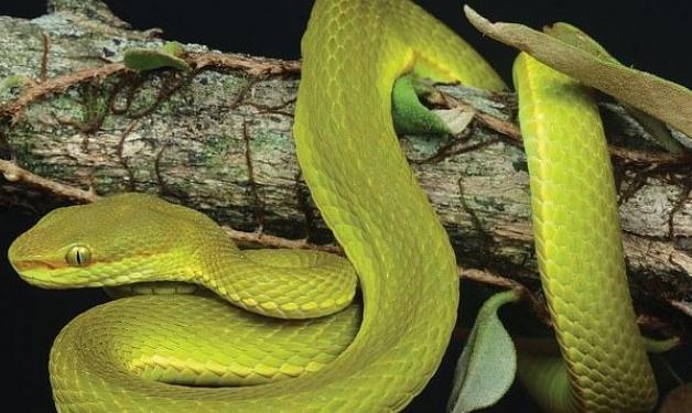فحيح الأفاعي.. لغة الثعابين التي تصدرها دون أن تسمعها، هل تعرف لماذا؟ 2